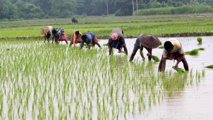 कृषि विधेयक : अन्नदाता को पुरुषार्थ का मूल्य मिल पायेगा !