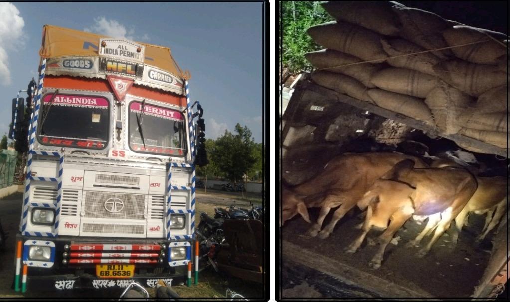 नहीं रुक रही गोतस्करी, पुलिस ने कन्टेनर व ट्रक में ठूंस-ठूंस कर भरे 74 गोवंश छुड़ाए